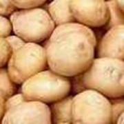 Картофель в Казахстане фото