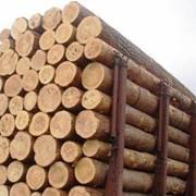 Платформы ж/д для перевозки лесоматериалов фото