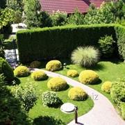 Ландшафтное проектирование,озеленение,дизайн и 3D моделирование. фото