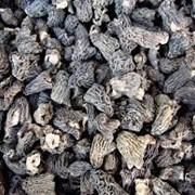 Продам сушенные сморчки грибы фото