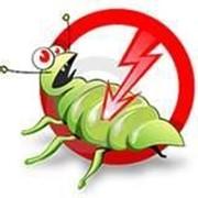 Дезинсекция, уничтожение опасных насекомых фото