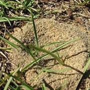 Обработка от мурашей фото