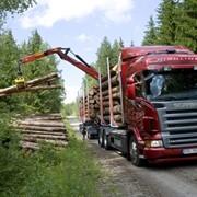 Услуги лесовоза. фото