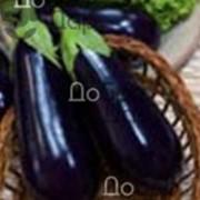 Семена баклажана фото