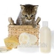 Шампуни для кошек фото