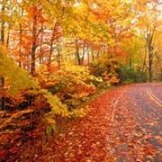 Сбор и удаление опавших листьев фото