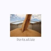 Услуга переработки зерновых культур фото