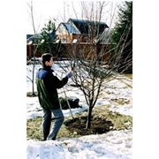 Предоставляем услуги по уходу за садами фото