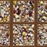 Витамины и подкормки для птиц фото