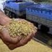 Экспертиза сельскохозяйственной продукции, экспертиза продуктов питания, экспертиза зерна, экспертиза фото