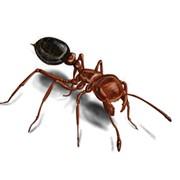 Nimicirea furnicilor Belnis фото