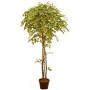 Искусственное дерево Береза Диор (Код товара: 50127) фото