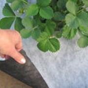 Агроволокно Premium-Agro 50 г/м² черно-белое (3,2*50 м) от сорняков фото