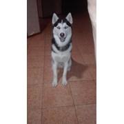 Мясная обрезь для собак фото