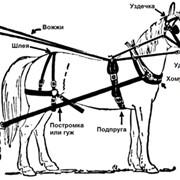 Упряжь для лошадей фото