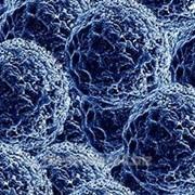 Коллоидный раствор наночастиц серебра фото