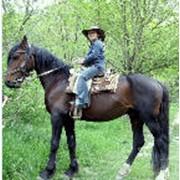Конные прогулки и прогулки на ослике фото