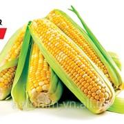 Насіння кукурудзи Піонер P8529 ua, міш фото