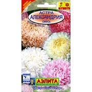 Семена цветов Астра Александрия, смесь фото