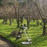 Обрезка  плодовых деревьев в Алматы. фото