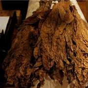 Производство табака в Молдове фото