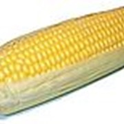 Закупка сельскохозяйственной продукции фото