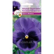 Семена Евро Витрока Витрока гигант Фиолетовая фото