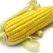 Семена кукурузы среднеспелой фото