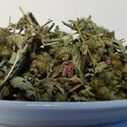 Репешок (трава) фото