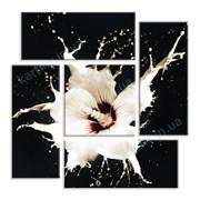 Картина Белый цветок фото