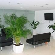 Озеленение помещений (фитодизайн интерьера) фото