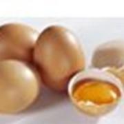 Яйцо куриное C2 фото