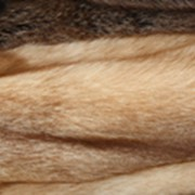 Мех лисы фото