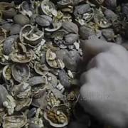 Переработка грецкого ореха в Бельцах фото