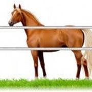 Комплект для Лошадей 400м фото