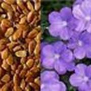 Услуги по закупке семян льна фото