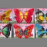 Бабочка с двойными крыльями пластиковые на магните 20см 3474 фото