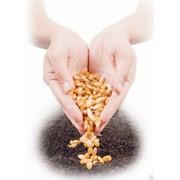 Весовые семена фото