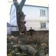 Спилить дерево, спилить ветки, удалить пень в Харькове и области фото