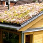 Сад на крыше,озеленение фото