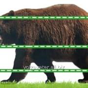 Электроизгородь Olli от медведей СБ+12 В 400 м фото