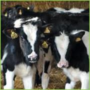 Заменитель цельного молока Экомилк 16% фото