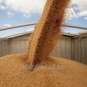 Пшеница четвертого класса на экспорт фото
