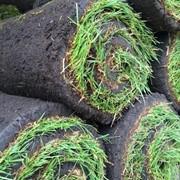 Укладка рулонного газона под ключ. фото