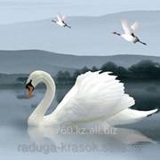 Картина стразами в 3Д Белый лебедь 50х50 см фото