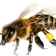 Препарат для пчел фото