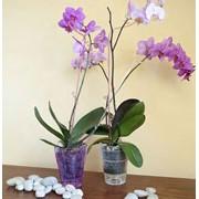 Цветочные горшки для орхидеи фото