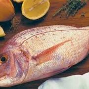 Рыба балычные изделия фото