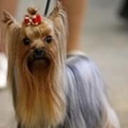 Обучение стрижке собак на видео DVD фото