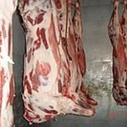 Мясо свинины купить оптом фото